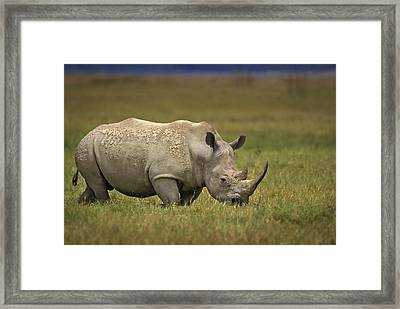Kenya, Lake Nakuru National Park Framed Print by Jaynes Gallery