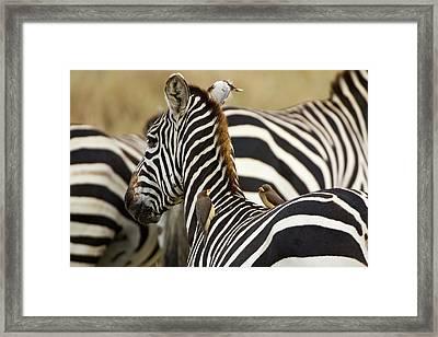 Kenya, Masai Mara Framed Print