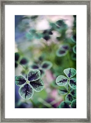 4 Leaf Clover Framed Print by Nancy Ingersoll