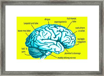 Learn About Your Brain Framed Print by Del Gaizo