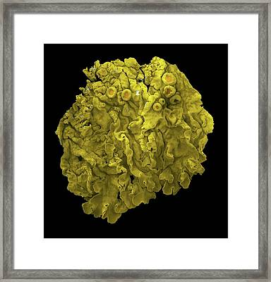 Lichen Framed Print by Karl Gaff