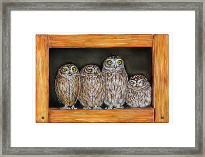 4 Little Owls Framed Print by Marina Durante