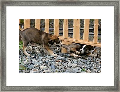 Come Out And Play Framed Print by Lon Goudey