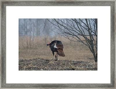 Male Eastern Wild Turkey Framed Print by Linda Freshwaters Arndt