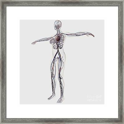 Medical Illustration Of Female Framed Print