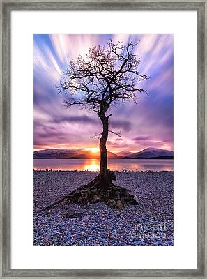 Millarochy Bay Tree Loch Lomond Framed Print by John Farnan