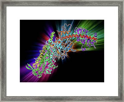 Molecular Motor Protein Framed Print
