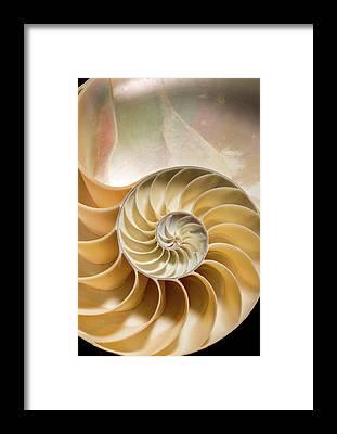 Invertebrata Framed Prints