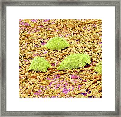 Nervous System Cells Framed Print