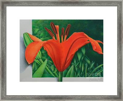 Orange Lily Framed Print by Pamela Clements