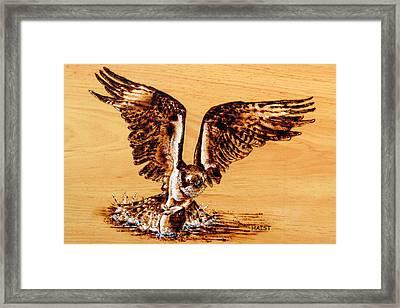 Osprey Framed Print by Ron Haist