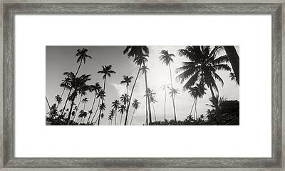 Palm Trees On The Beach, Morro De Sao Framed Print
