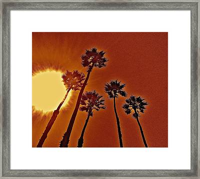 4 Palms N Sun Framed Print by Joe  Burns