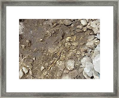 Partially Excavated Human Fossil Framed Print