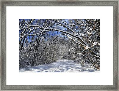 Path In Winter Forest Framed Print