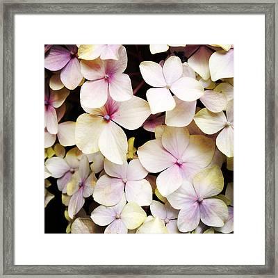 Petals Framed Print by Les Cunliffe