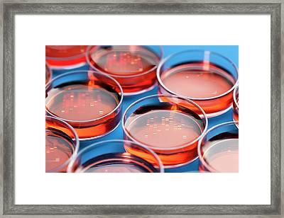 Petri Dishes Framed Print