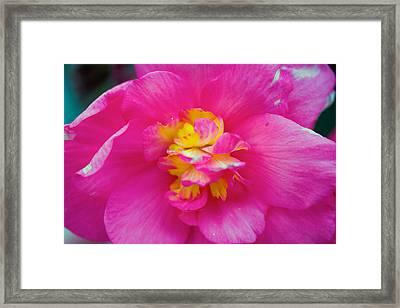 Pink Flower Framed Print