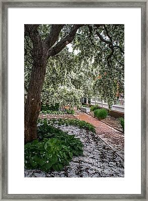 Prescott Park Framed Print by Scott Thorp