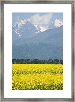 rapeseed field in Brnik with Kamnik Alps in the background Framed Print