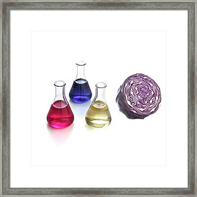 Red Cabbage Ph Indicator Framed Print