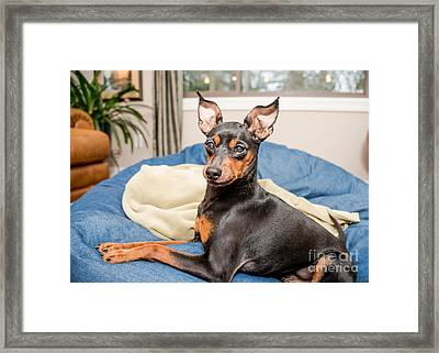 4 Resized Framed Print