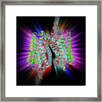 Rhodopsin Molecule Framed Print