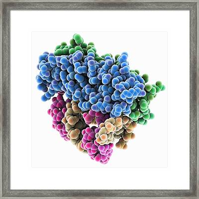 Rna Interference Viral Suppressor And Framed Print by Science Photo Library