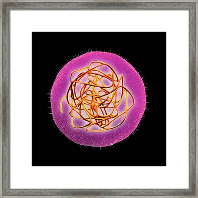 Rubella (german Measles) Virus Framed Print