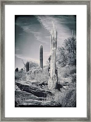 Saguaro Skeleton Framed Print by Kelley King