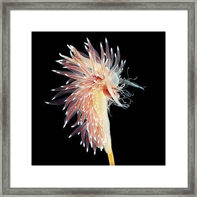 Sea Slug Framed Print