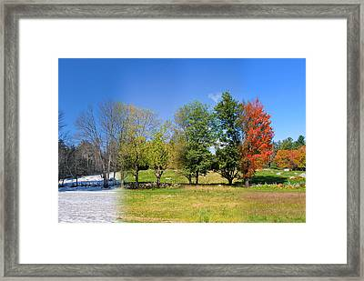 4 Season Trees In New Hampshire Framed Print