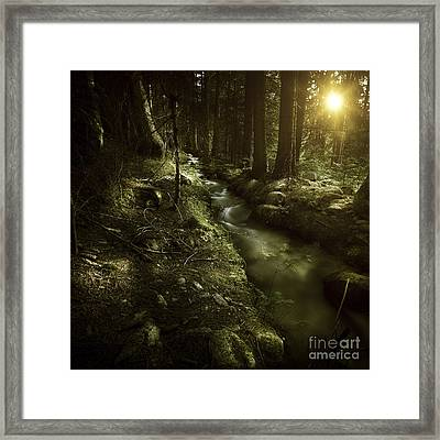 Small Stream In A Forest At Sunset Framed Print by Evgeny Kuklev