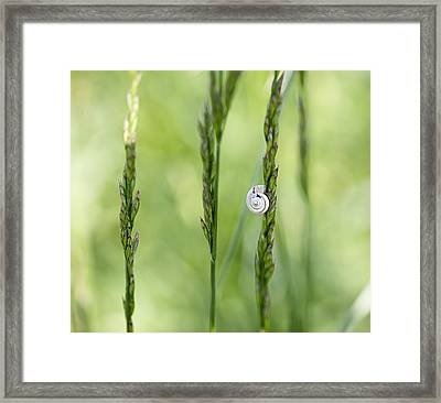 Snail On Grass Framed Print