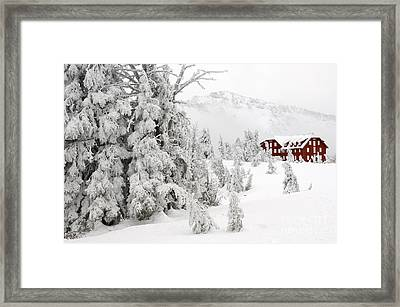 Snow And Ice On Trees Framed Print by John Shaw