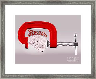 Stress Framed Print by Scott Camazine