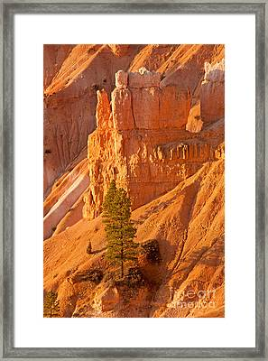 Sunrise At Sunset Point Bryce Canyon National Park Framed Print