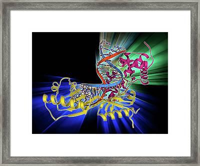 Tata Box-binding Protein Complex Framed Print by Laguna Design