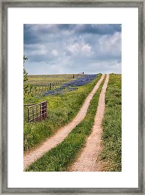Texas Bluebonnets 1 Framed Print