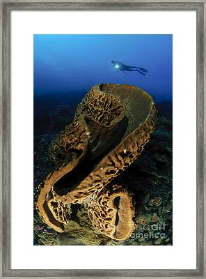The Salvador Dali Sponge With Intricate Framed Print by Steve Jones