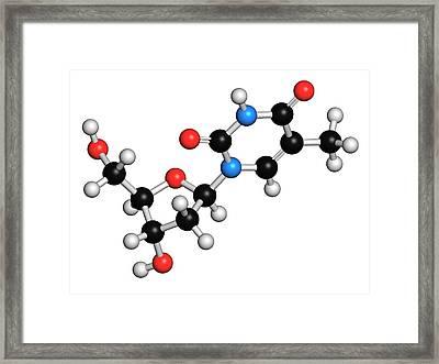 Thymidine Nucleoside Molecule Framed Print