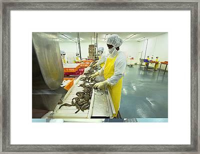 Tiger Prawn Farming, Madagascar Framed Print