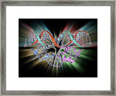 Transcription Factor And Dna Molecule Framed Print