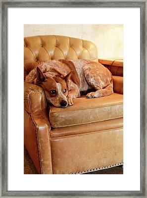 Tucson, Arizona, United States Framed Print by Julien Mcroberts