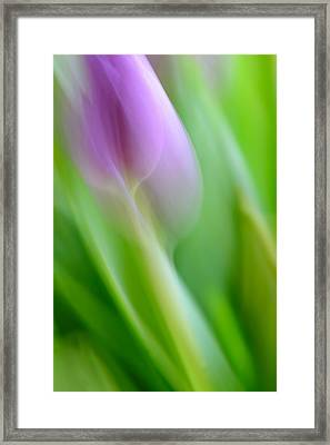 Tulip Framed Print by Silke Magino
