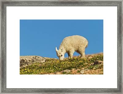 Usa, Colorado, Mount Evans Framed Print