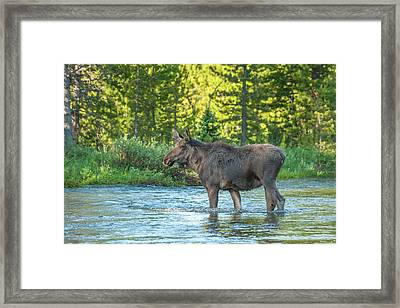 Usa, Colorado, Rocky Mountain National Framed Print by Jaynes Gallery