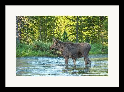 Colorado River Crossing Framed Prints