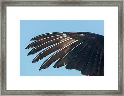 Usa, Florida, Everglades National Park Framed Print