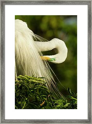 Usa, Florida, Gatorland Framed Print